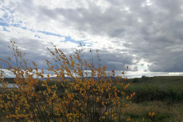2020 autumn grassland